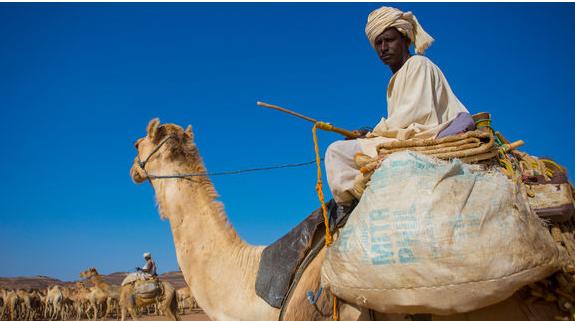 Buôn lạc đà: ngành kinh doanh đang phát đạt ở Đông Phi